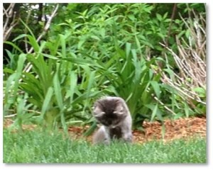 For Mystique, that focus involves hunting chipmunks. She is diligent, persistent, patient and remarkably successful at this occupation.