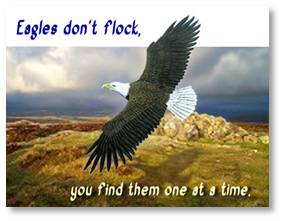 Eagles Don't Flock You Have to find them one at a time