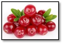 Cranberries are harvested in the fall and most often associated with Thanksgiving and a dish of sauce. They deserve much more attention. There are two ways to harvest a cranberry: wet and dry.
