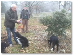 "We arrived at the truffle farm and were greeted by Edouard and his dog Farâh (accent on the last syllable.) Edouard and his family are the only residents of this small village in the Périgueaux region. He took us out into his ""orchard"" of small quercus ilex trees—evergreen oak or holly oak—growing in neat rows."