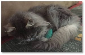 Mystique appears to be a tad better today—more mobile and willing to move around. I think her head has come up a little but that could be my imagination. I leave her in the care of my husband and son, who will give the medication and offer food and water. If I put food on her paw she will lick it off eagerly but isn't interested in what's in the food dish I stick under her nose.  She will probably go back to the vet for some IV fluids as she's still not drinking.