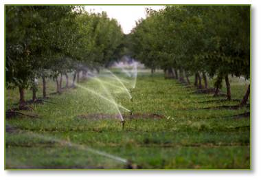 """Even worse, it's ravaging the planet."""" Environment-wise, 80% of the world's almonds are grown in California, which is suffering its fifth year of severe drought. It takes 1.1 gallons of water to produce a single almond and 25.3 gallons of water to produce a single serving of almonds."""