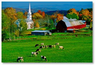 I make no apologies for drinking cow's milk from happy cows that roam New England's green pastures. I do prefer organic milk or milk from companies like Garelick Farms that advertises no antibiotics or artificial growth hormones.