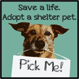 Pick Me, save a life, adopt a shelter pet