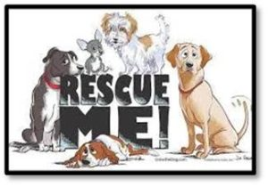 Rescue me, rescue pets, adopt a pet, animal shelter
