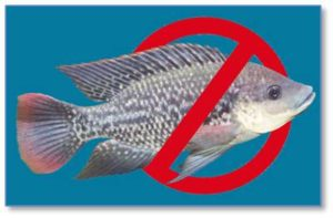 But I won't eat Tilapia, which is often the cheapest fish in the market.