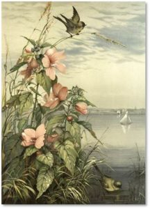 """Marsh Mallow"" by Fidelia Bridges, L. Prang Co. chromolithography"