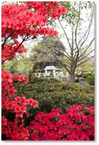 Forest Hills Cemetery, garden cemeteries, Jamaica Plain