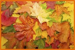 autumn leaves, transition kitchen, roundup of October 2017 posts
