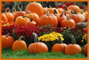 pumpkins, squash, transition kitchen, pumpkin spice