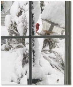 birdfeeder, cardinal, heavy snow