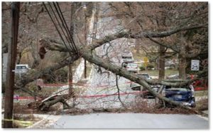 Fallen trees, power lines, power outage, nor'easter