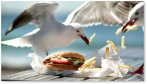 seagulls eating fries, flock of seagulls, charities