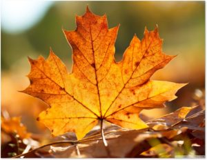 maple leaf, roundup of September 2018 posts