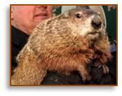 groundhog, groundhog day, Punxutawney Phil