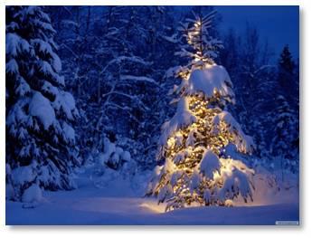 Christmas tree, snowy woods