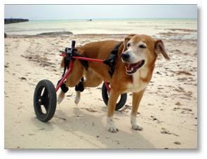 K9 Cart, pet mobility, dog wheelchair