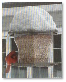 Cardinal on bird feeder