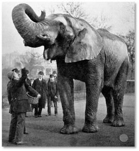 "America's most famous showman was also a founding trustee and benefactor of Tufts. And Jumbo was a real elephant who lived at the London Zoo for 16 years, giving ""howdah"" rides to little children. P.T. Barnum wanted Jumbo for his circus and acquired the elephant in 1860, paying $10,000 for him (about $240,000 today) and igniting a storm of outrage in England."