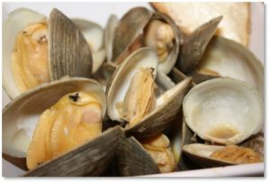 steamer clams, july 2017 posts