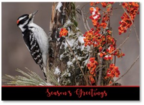 National Wildlife Federation, Christmas cards, woodpecker