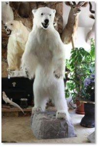 polar bear, taxidermy, Kakas Fur Compay, Newbury Street, Boston