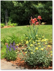 perennials, red iris, yellow yarrow, blue salvia