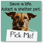 Save a life, adopt a shelter pet, pick me, pet shelter, no-kill shelter