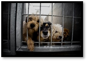 pet shelter, no -kill shelter, doggy in the window, adopt a pet