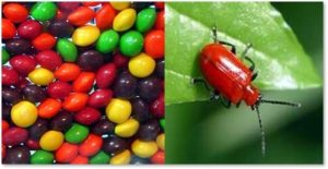 candy, insect shellac, insect cocoons, Natural Flavors