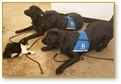 service dogs, training a service dog, Americans with Disabilities Act. ADA