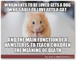 Hamsters teach the meaning of death