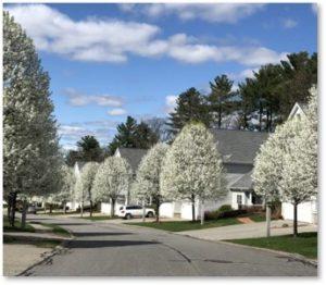 Sauta Farm, Bradford Cherries, spring, flowering trees, Roundup of April 2019 posts