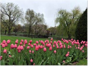 Spring, tulips, Boston Public Garden, Roundup of May 2019 Posts
