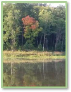 Wisconsin, red tree, autumn, change