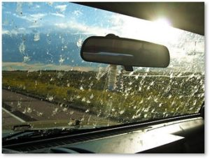 insects on windshield, windshield phenomenon