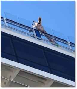 giraffe, cruise ship, cruiseport