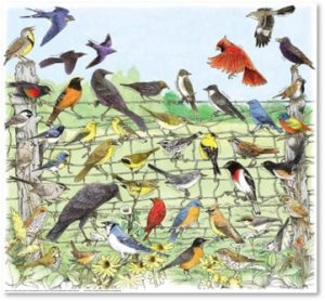 songbirds, birds, North American birds