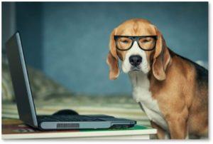 dog reading on computer, beagle, blog, Susanne Skinner