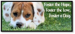 Foster the hope, Foster the love, Foster a dog