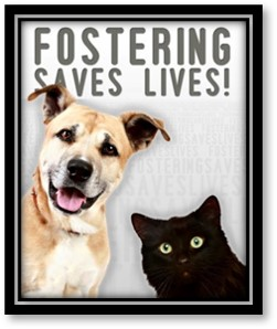 Fostering Saves Lives, Foster Dog, Foster Cat, Rescue