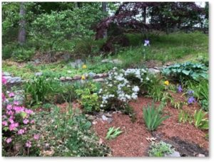 Helga's Garden, First Parish of Sudubury, mulch