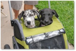 dog stroller, doggie stroller, dog culture