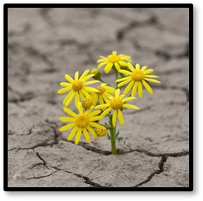Flowers in Concrete, resilience, tragedy