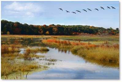 Water Meadow, Concord River, Great Meadows National Wildlife Refuge