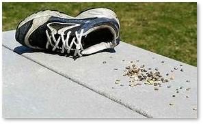 pebble in shoe, annoying, irritating