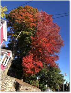 Hudson MA, foliage, maple, October