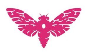 cicada, May 2021
