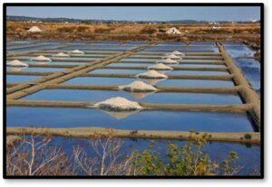 Guerande Salt Marshes, fleur de sel, sel gris, salt production. France