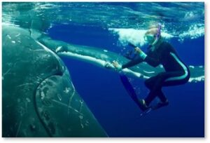 Humpback whale protects woman